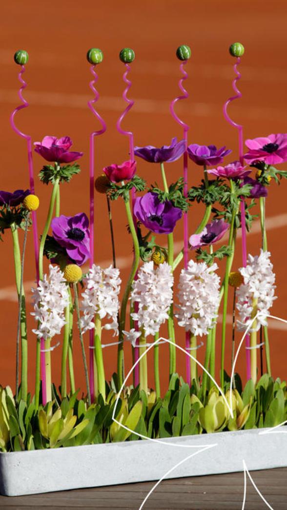 anemone jardin printanier