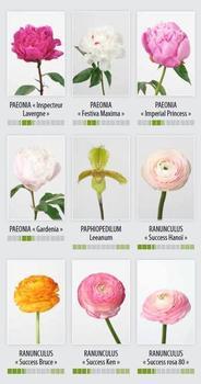 nouveau catalogue fleurs coup es et feuillages